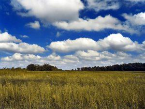 1 Cirrocumulus_cloud
