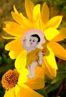 Nhạc Phật giáo Karaoke 286 – Hoa dung – Đức Quảng